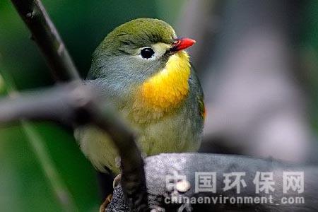 北京市一级保护野生动物增加16种